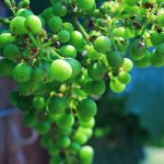 Divine Wines – Boutique Wineries in the South Okanagan